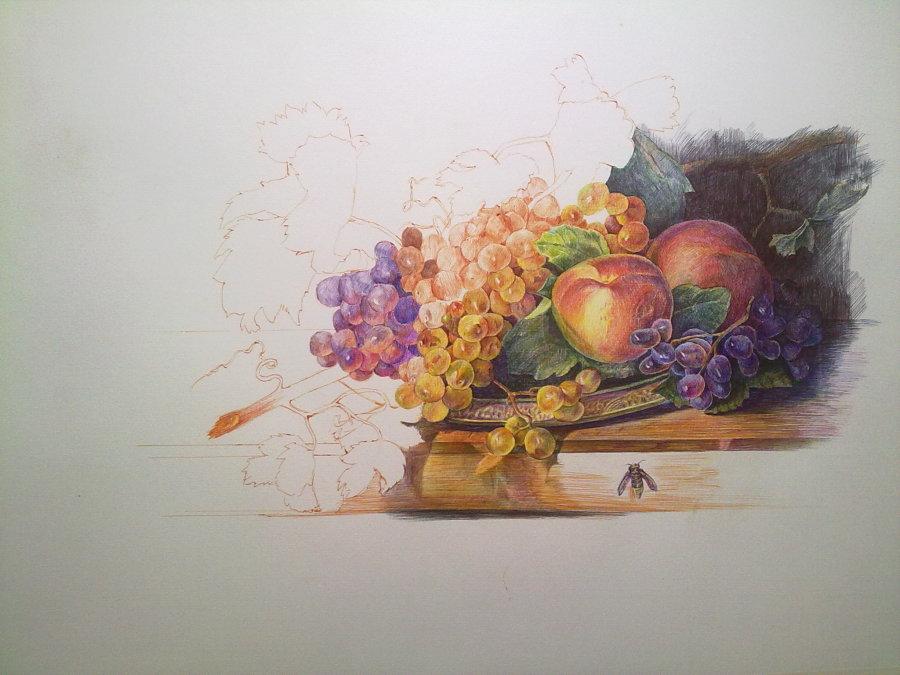 圆珠笔手绘教程:彩色圆珠笔绘制《有葡萄的静物》步骤