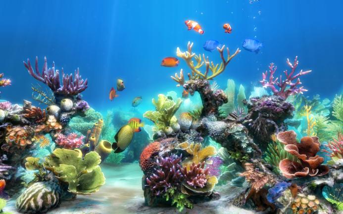 aquariumdesktop - aquariumdesktop.exe - process information