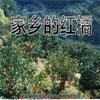 家乡的红橘教学课件免费下载【小学语文】