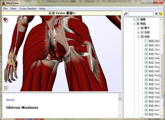 3d人体骨骼软件(mediview)