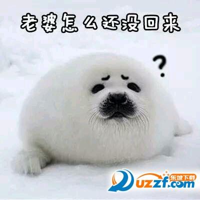 聊天通讯 斗图表情  → 超萌小海豹表情包 高清完整版  超萌小海豹