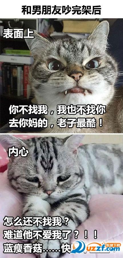 萌猫故作镇定表情包完整无水印版图片