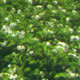 马铃薯种植技术讲座ppt(新型职业农民培训课件)完整免费版【共40页】