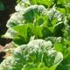 蔬菜主要病虫害识别及防治技术课件电子完整版免费下载