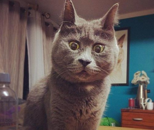 惊讶猫qq表情包_网站关键字_东坡下载图片