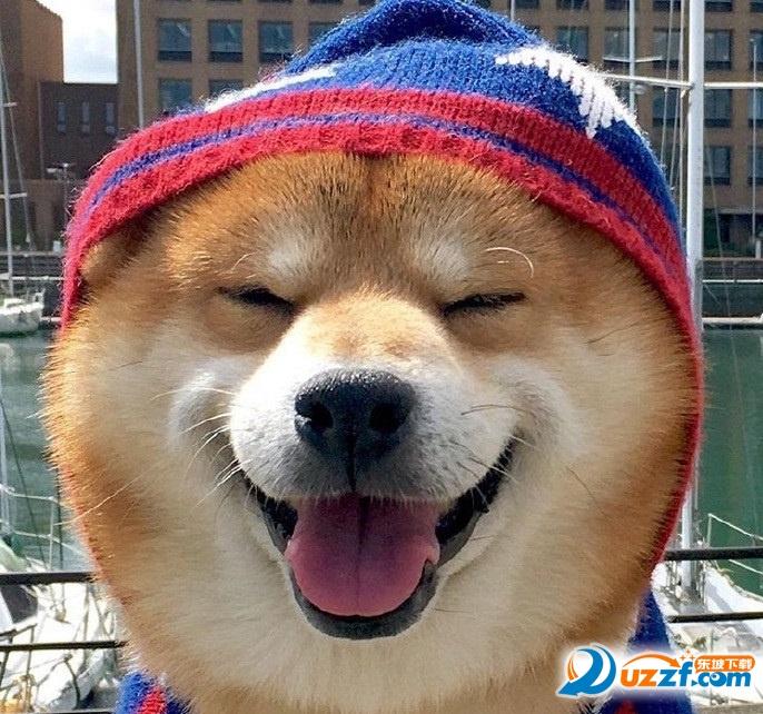 柴犬傻笑无字卖家表情表情可爱图片
