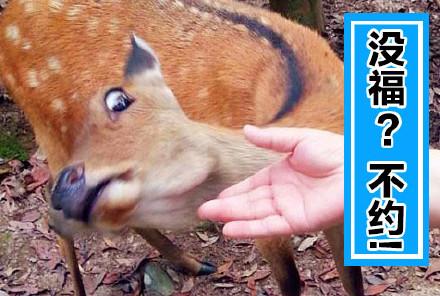 动物搞笑五福表情包超清无水印版