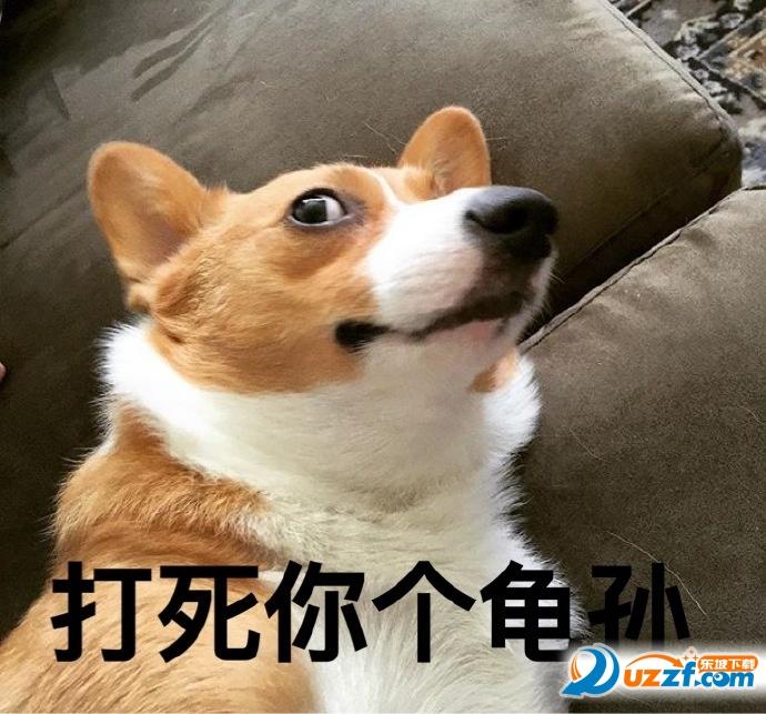 超级可爱的柯基带字表情mix3Animoji表情包动画图片