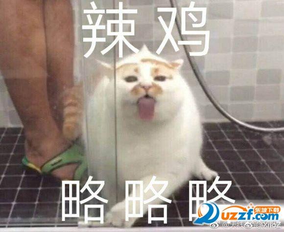 表情娘的猫楼楼猫大全我只有心里的表情包水印超清无楼板纪念版图片