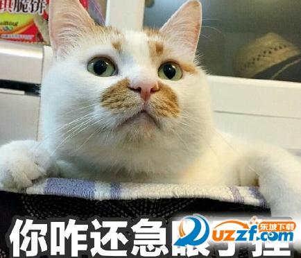 纪念网红楼楼猫表情包系列图片完整无水印版