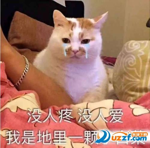 聊天通讯 斗图表情  → 楼楼猫gif动态表情包大全 无水印动态版