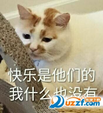 聊天通讯 斗图表情  → 楼板娘的猫楼楼猫表情包大全 超清无水印纪念