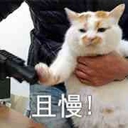 楼板娘的猫楼楼猫表情包大全超清无水印纪念版