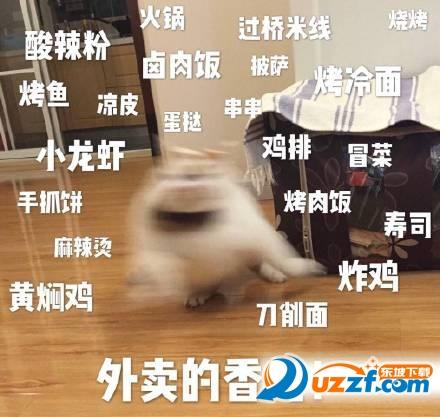 楼楼猫gif表情表情动态是大全包酒潮汕图片