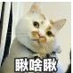 猫咪楼楼表情包免费下载高清无水印版