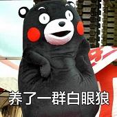 熊本熊简直养了一群白眼狼表情包超清无水印版