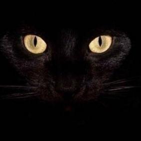 黑猫开灯壁纸高清版整合版