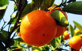 朱自清父亲买橘子去表情包合集