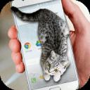 猫咪动态屏幕app2.6.7 安卓最新版