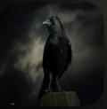 乌鸦在屏幕上飞