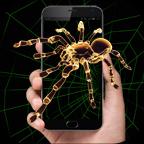 手机屏幕养蜘蛛