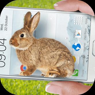 手机屏幕上有兔子跳软件