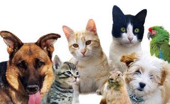 手机宠物服务