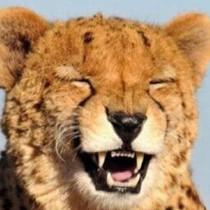 一位不愿意透露姓名的小猫咪对你说了句敲里吗表情包高清版