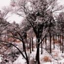 冬季壁纸高清大图