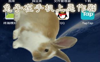 兔子在手机上恶作剧