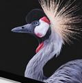Surface Pro LTE版固件及驱动官方免费版