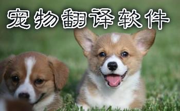 宠物语言翻译U乐娱乐平台