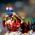 皮皮虾表情包七彩版