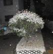 2017下雪了微信图片大全最新版