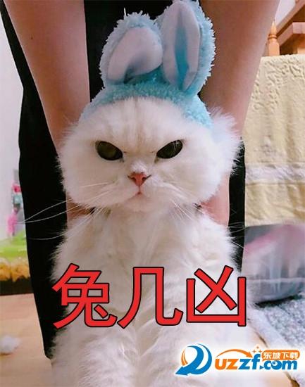 眨眼凶猫咪表情图片大全高清无水印动态版