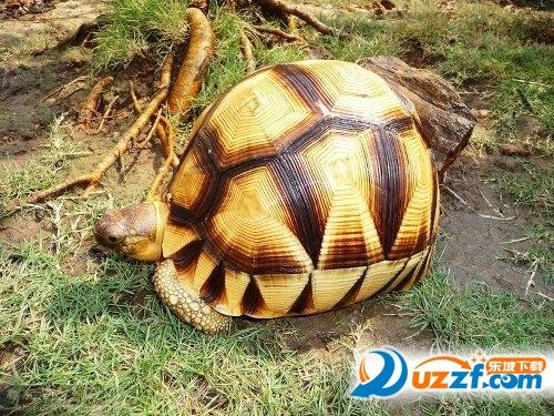 保温龟舍设计图