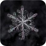 雪花直播app