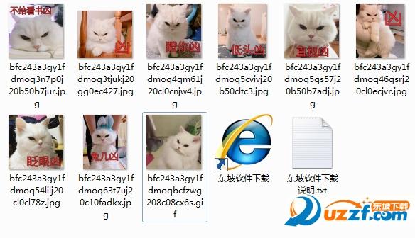 眨眼凶猫咪表情图片大全截图1