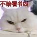 眨眼凶猫咪表情图片大全