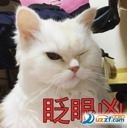 眨眼凶猫咪表情图片大全截图0