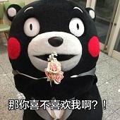 熊本熊你喜不喜欢我表情包超全打包版