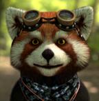 爷大干的浣熊软件build 1179 破解免费版