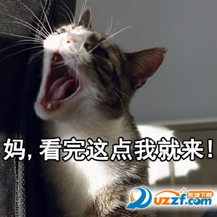 猫喊妈表情大全表情不蹦迪今晚图片包图片