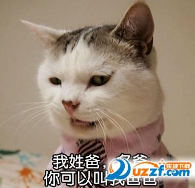 表情喊整版的爸爸|图片喊爸表情完猫咪猫咪的设计师梗搞笑图片