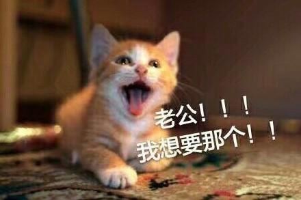 动物喊爸的图片