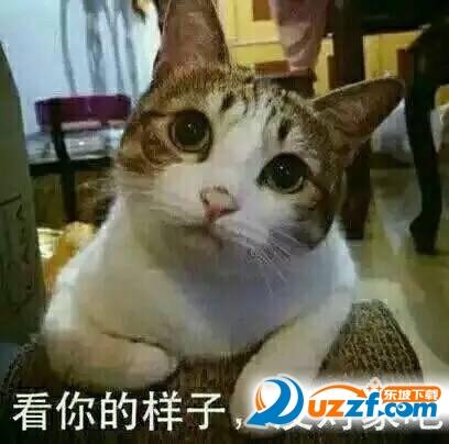 人民的猫奴表情图片大全截图1
