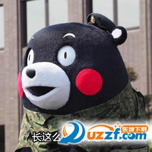 熊本熊减肥表情包高清无水印版图片