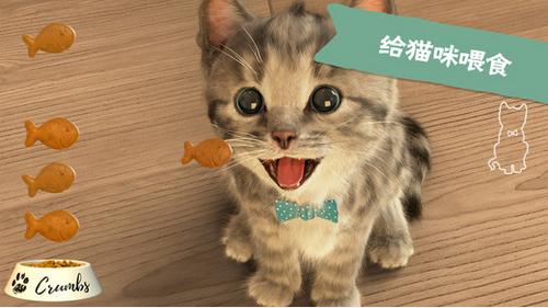 探索猫咪的世界,发现可爱的动画
