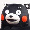 熊本熊之我要学习表情包高清无水印版