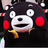 熊本熊之表白系列表情包高清无水印版